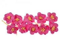 http://www.essy-floresy.pl/pl/p/Kwiat-wisni%2C-ciemny-rozowy/187