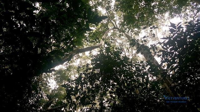 Người ta gọi 2 cây này là Cây Phu Thê