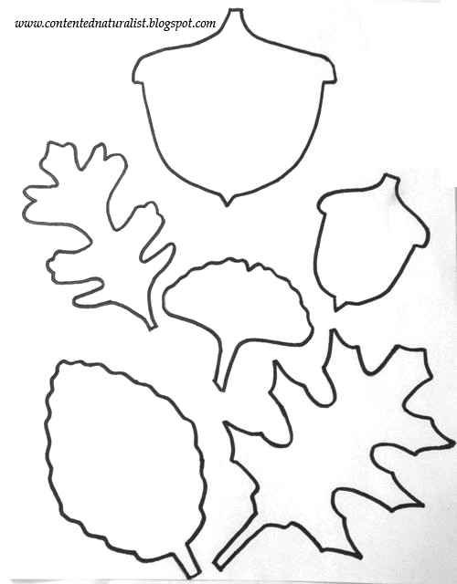 The contented naturalist leaf template craft with free for Autumn leaf template free printables