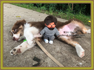 kiki monchhichi chiot toys vintage chiot berger australien