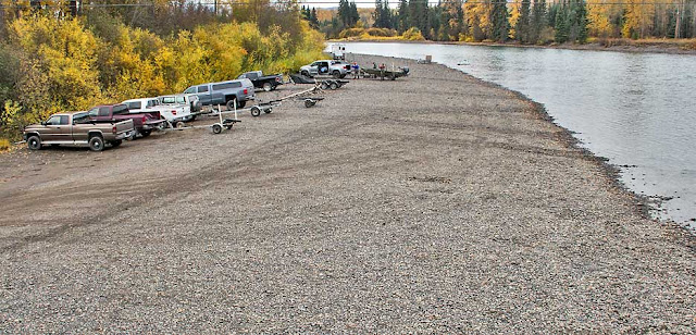 Bulkley River Steelhead run