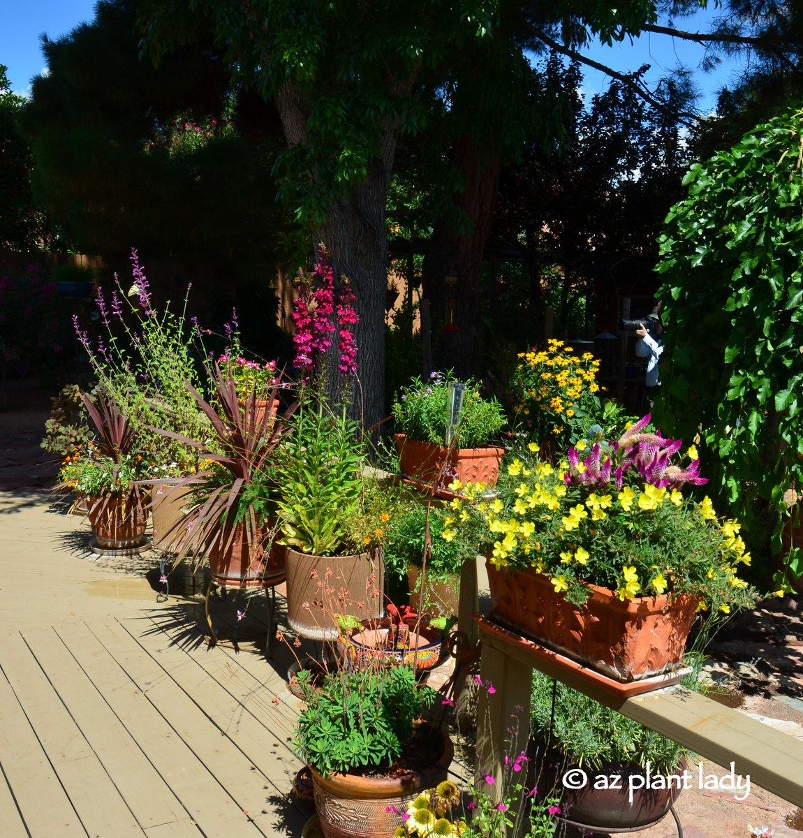 """8 Stunning Container Gardening Ideas: Container Gardening Book Review & Giveaway: """"Getting"""