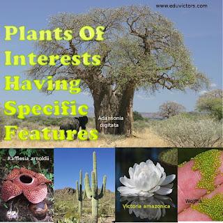CBSE Class 11/12/NEET/AIPMT Plants Of Interests Having Specific Features (#neet)(class11biology)(#biologyquiz)(#cbsenotes)