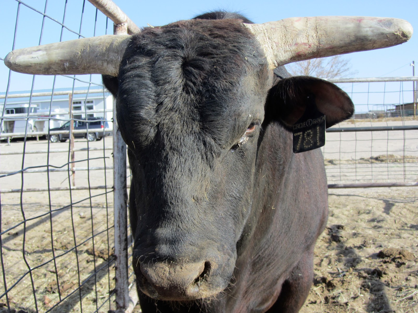 SNOTITUDE Bucking Bull Blog: This, That and Bull Snot!