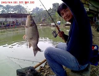 Master Umpan Serbuk Ikan Mas Siap Pakai