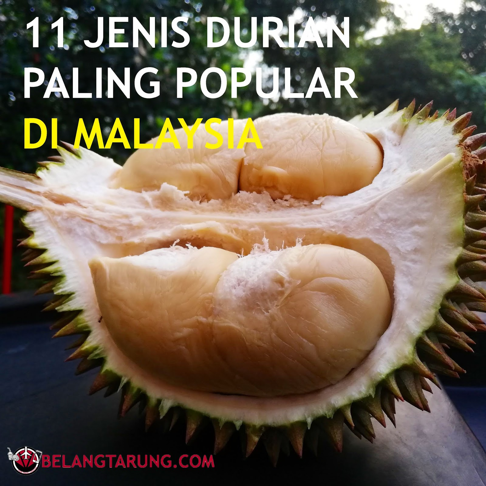 11 Jenis Durian Popular Dan Laris Di Malaysia Travel Eat Lifestyle Blog