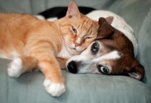 Gato e cachorro dormindo amorosamente.