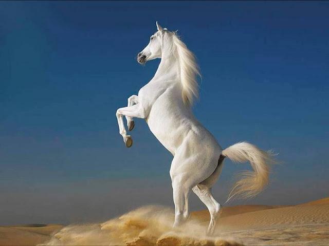 O cavalo é um mamífero da mesma família dos asnos e das zebras, a dos equídeos. Todos os sete membros da família dos equídeos são do mesmo gênero e podem relacionar-se e produzir híbridos, não férteis, como as mulas.