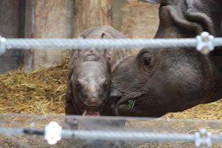 Mom & Baby Rhino.