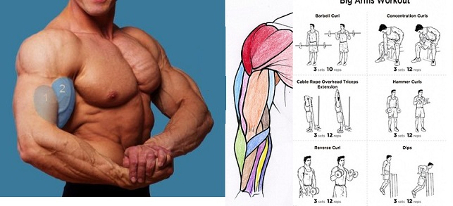 Ways to Increase Arm Muscles by 100%