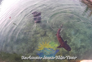kolam hiu wisma apung