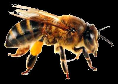 Trik cara mengatasi serangan lebah