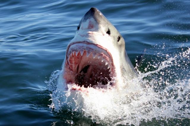 Tiburón lo muerde y ahora sufre de una bacteria 'comecarne'