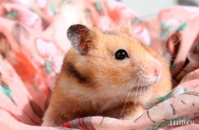 Mejora tus fotografías consejos I hamster