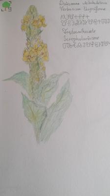 słowianie, bogini, roślina, zielnik, kwiaty, kwiat, zieleń, żółć