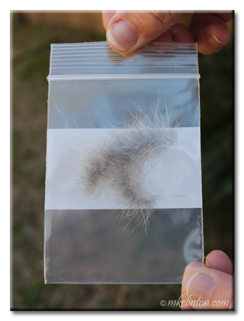 Baggie of Bentley basset Hound's hair for PetMedella