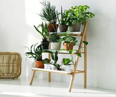 desain taman vertikal di dalam rumah