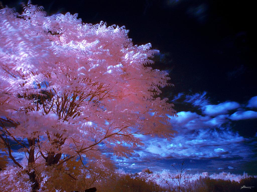 Beautiful Nature Images: Beautiful Nature Images World