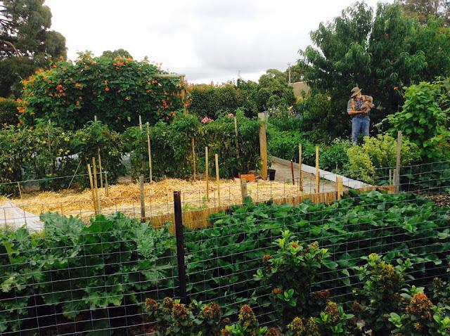 veggie%2Bgarden.jpg