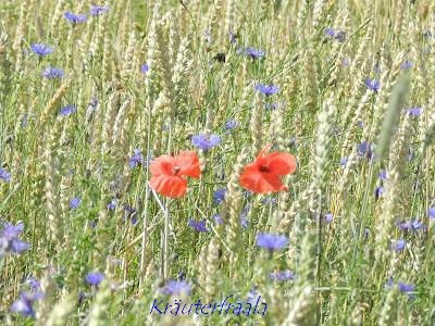 Sommerblumen im Getreidefeld