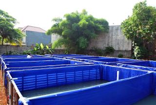 kolam terpal - BUDIDAYA IKAN PATIN