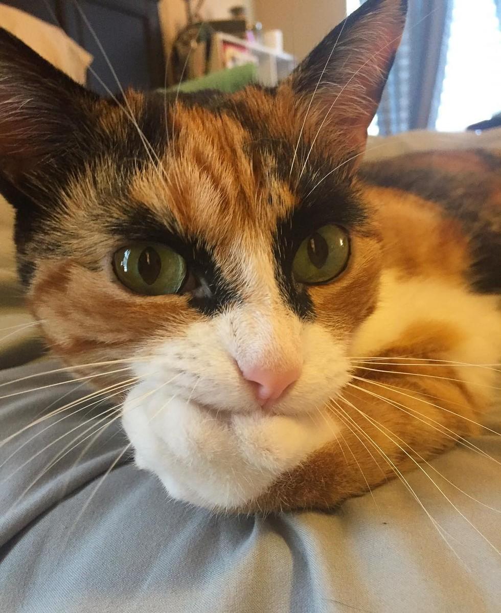 Кошки с бровями картинки