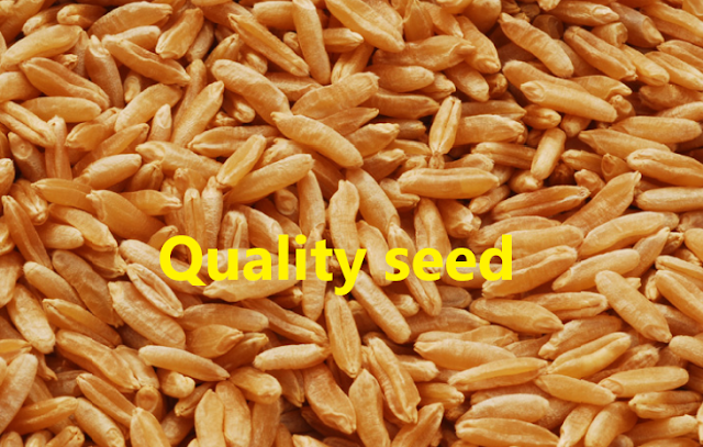 Qualities of a good seed