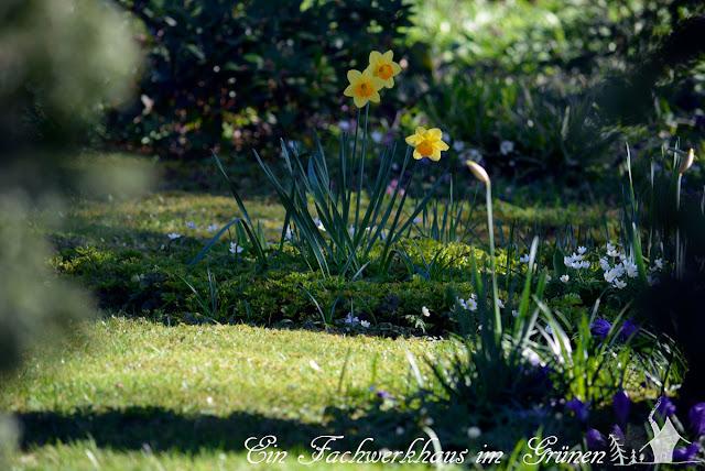 Garten, Frühling