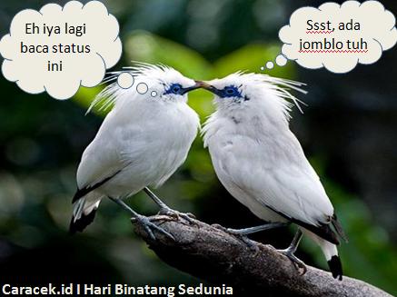 gambar-hari-binatang-sedunia-2