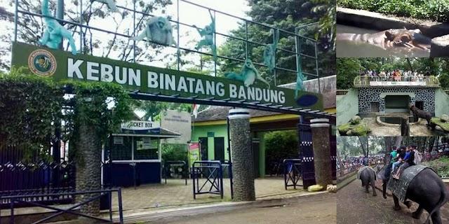 Kebun Binatang Bandung, Wisata Pendidikan dan Hiburan di Musim Liburan