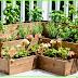 10 Tanaman Obat yang bisa ditanam di perkarangan Rumah.