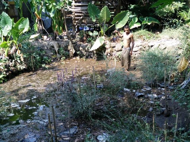 Punjul membersihkan kolam gali yang ditumbuhi rerumputan