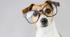 Conoce las 15 razas de  perros más inteligentes del mundo