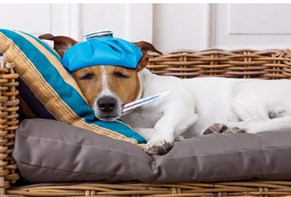 Proteja-mascota-cambios-clima-temporada-sencillos-consejos-Pet- Food-Institute