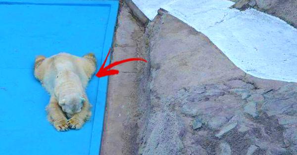 polar bear dies separation partner years
