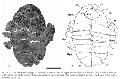 Selenemys fossil