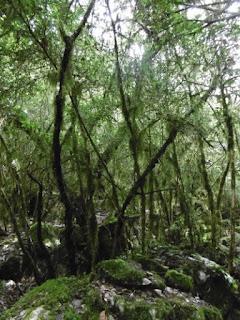 La forêt de Brocéliande, malooka