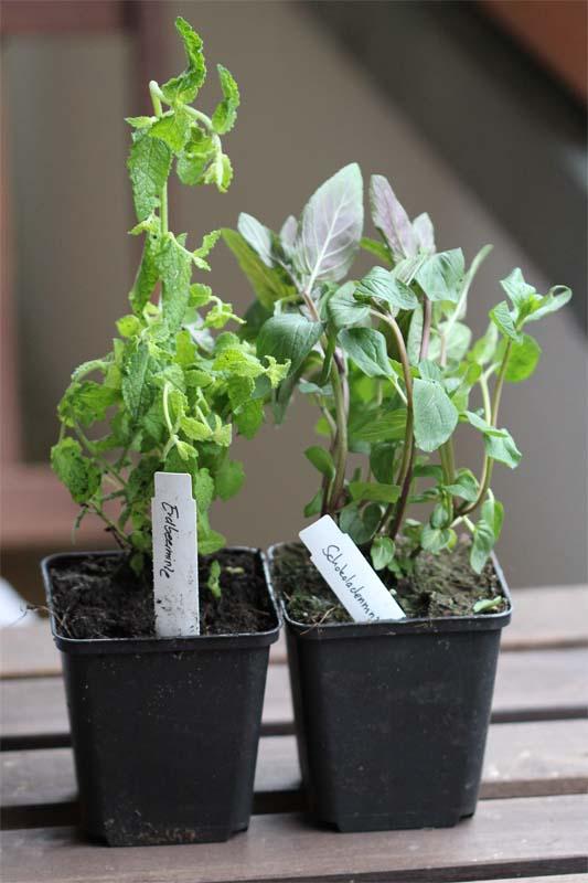 mein balkon gekaufte pflanzen oder saatgut. Black Bedroom Furniture Sets. Home Design Ideas