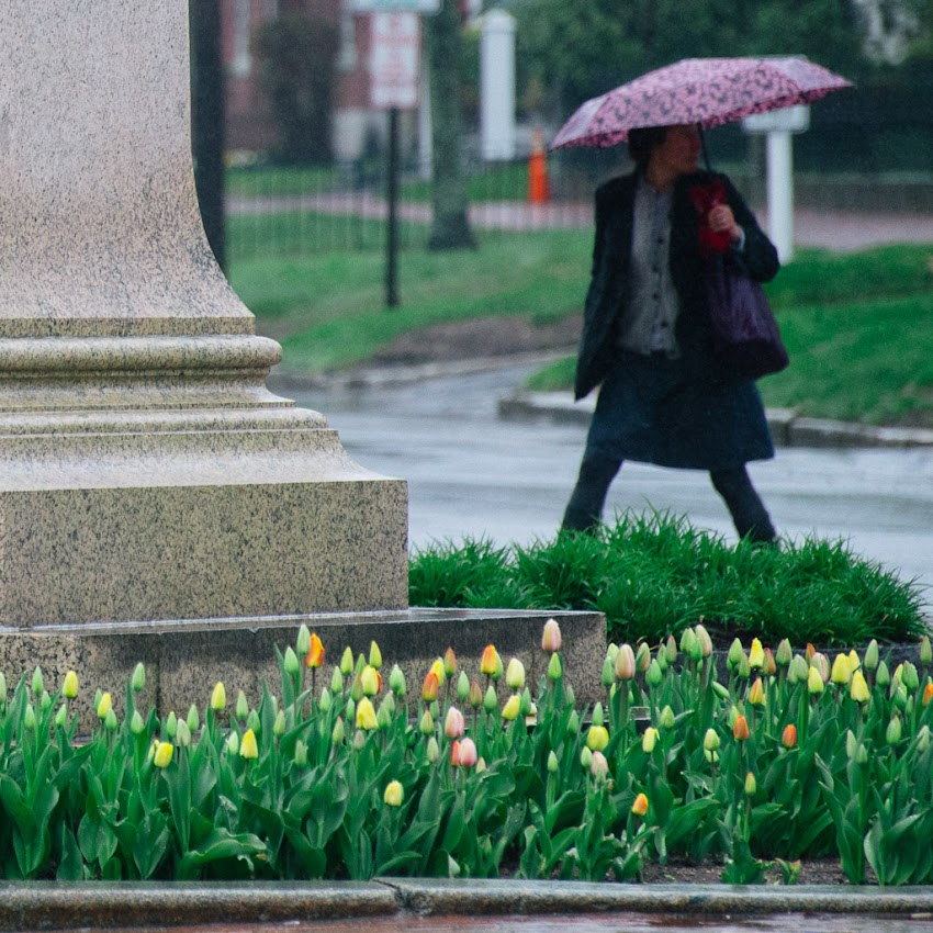 Portland, Maine USA May 2016 photo by Corey Templeton. From a recent rainy evening in Longfellow Square. It's the season for flowers and umbrellas.