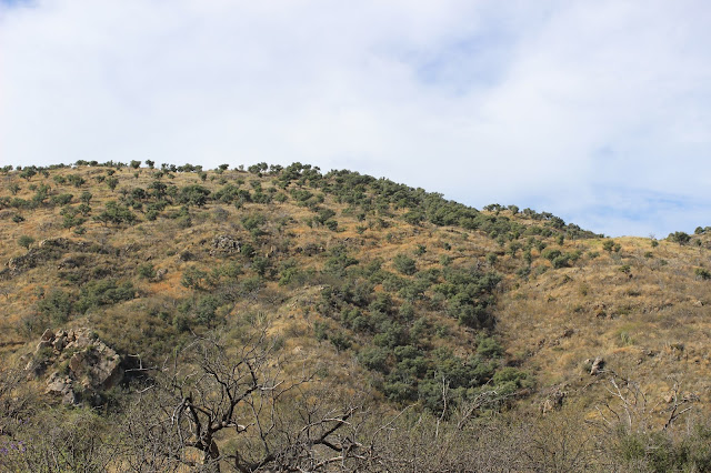 Guided%2BCoues%2BDeer%2BHunts%2Bin%2BSonora%2BMexico%2Bwith%2BJay%2BScott%2Band%2BDarr%2BColburn%2BDIY%2Band%2BFully%2BOutfitted%2B23.JPG