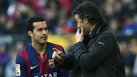Pedro- ra đi không phải vì tiền