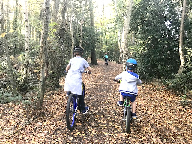 riding bikes in the woods