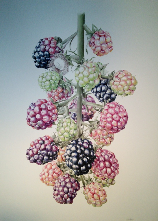 Blackberry painting by Jessica Rosemary Shepherd