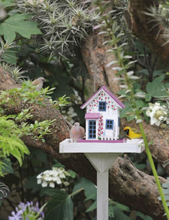 Feed the Birds in Garden