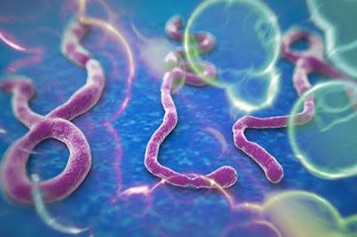 ظهور سلالة فتاكة من فيروس «إيبولا» تهدد حياة البشرية