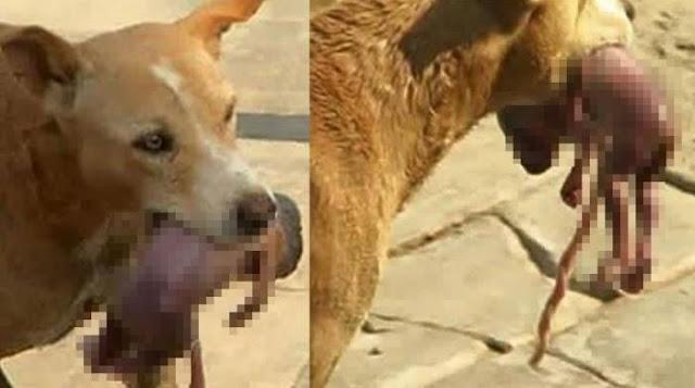 Subhanallah , Anjing Ini Selamatkan Bayi Yang Dibuang ! Membuat Anda Meneteskan Air Mata