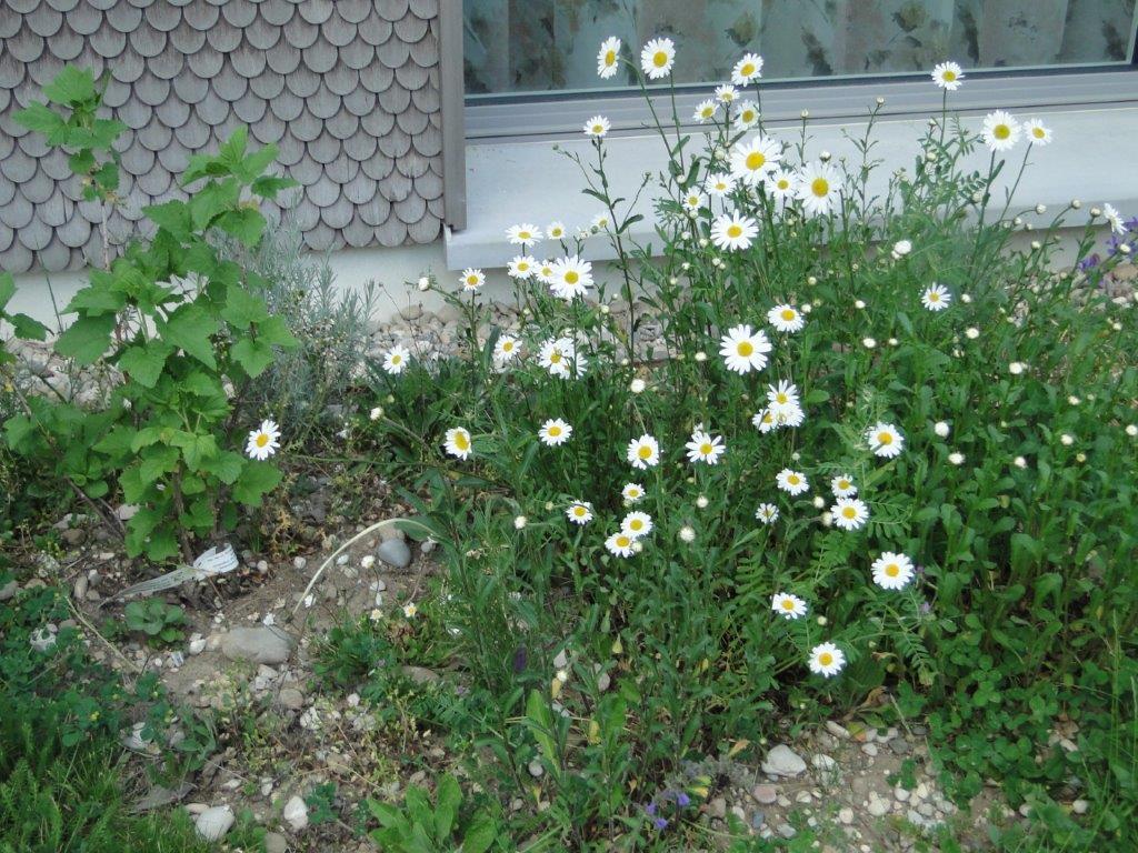 Bezaubernd Blumen Mai Beste Wahl