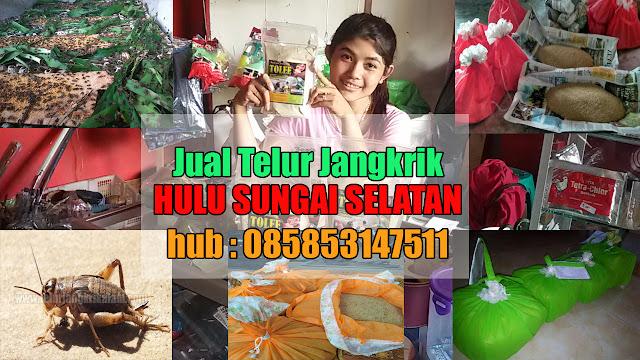Jual Telur Jangkrik Hulu Sungai Selatan Hubungi 085853147511