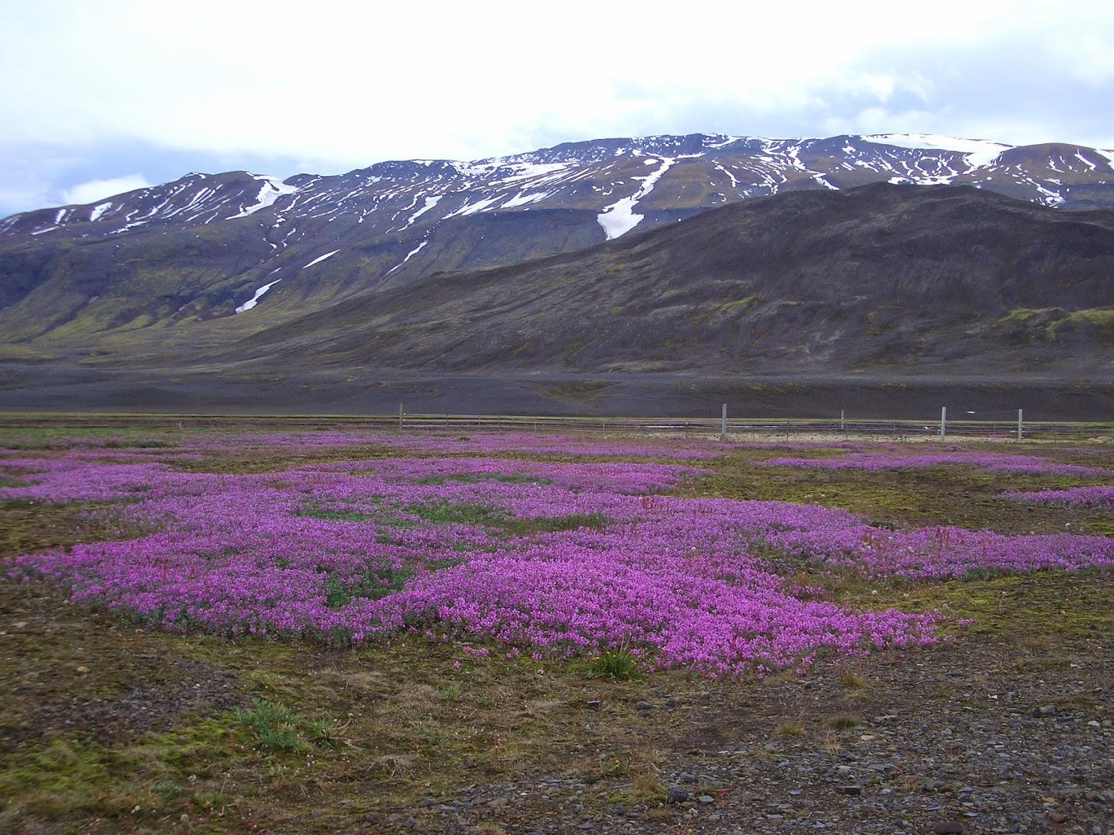 Tungnafellsjökull, Islandia
