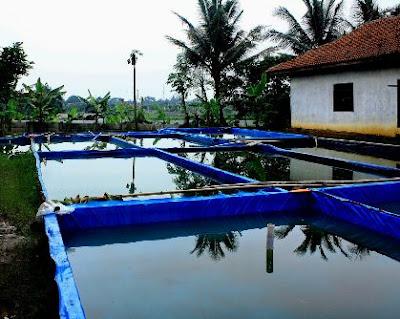 Budidaya Ikan